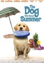 Yaz Köpeği – The Dog Who Saved Summer 2015 Türkçe HD izle